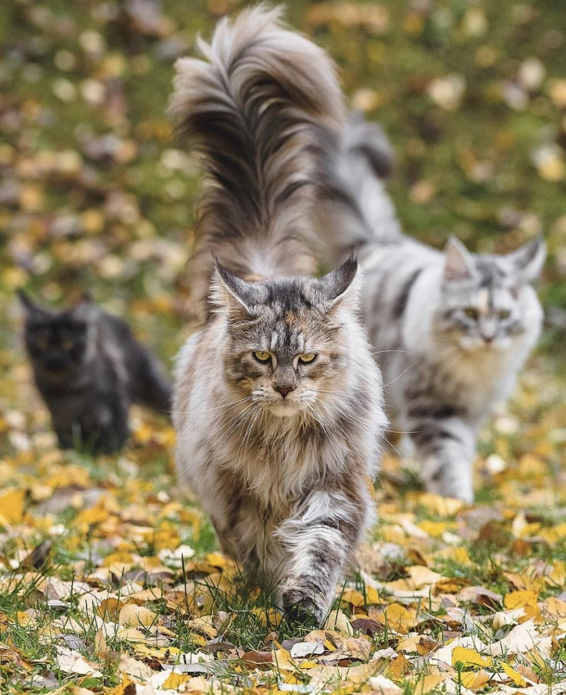 These cats won world bloggers awards